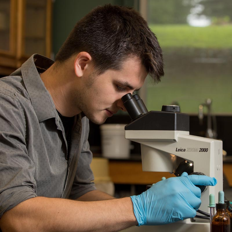 A student examines specimines on a microscope.