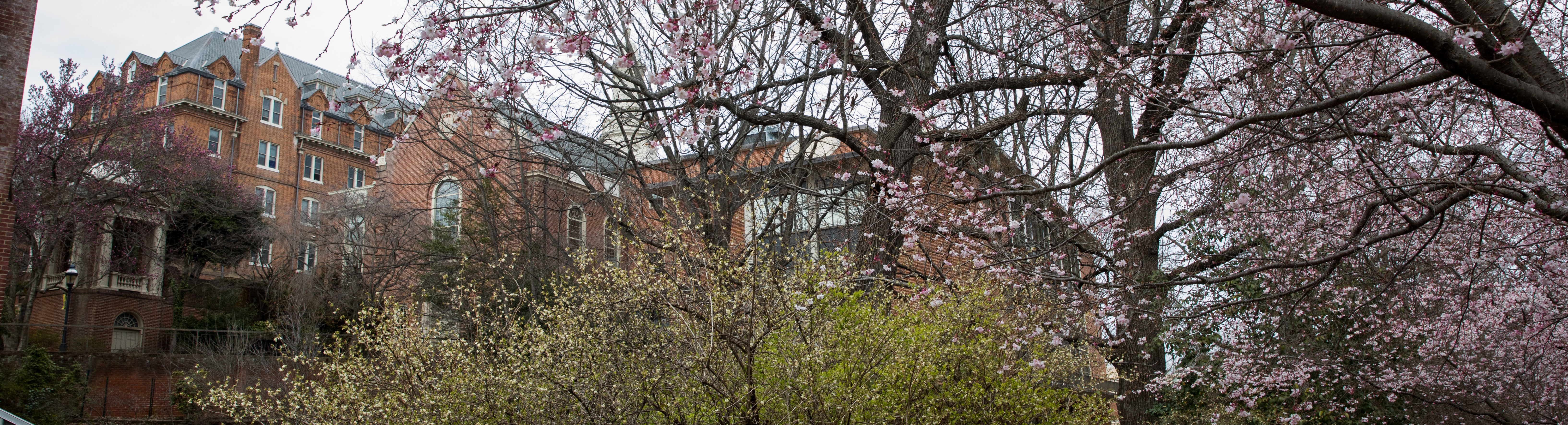 Photo of campus in the spring.