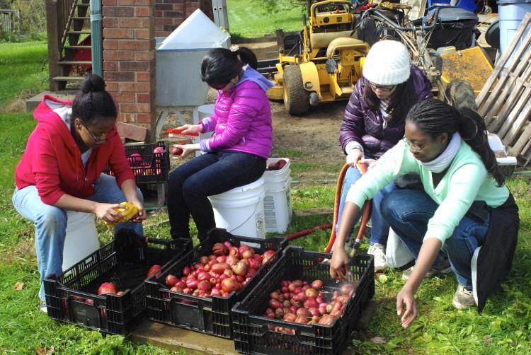 Photo of students volunteering