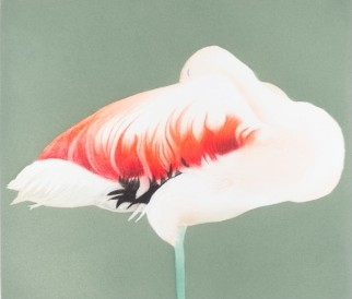Flamingo Sleeping by Beth Van Hoesen