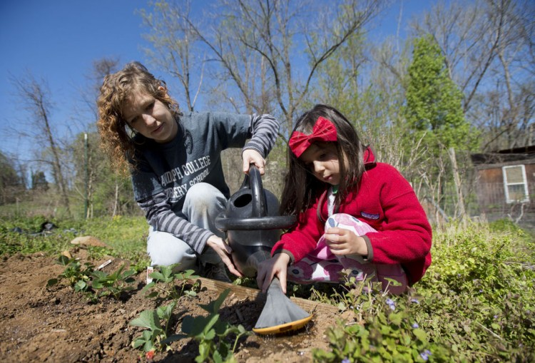 Teacher Shanna Jackson (left) helps Mikaela Mehrotra water strawberries the class planted in their plot inside the organic garden on the campus of Randolph College on Wednesday. Photo by Jill Nance