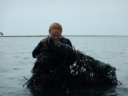 Libby Exline '19 examines a seagrass bed off of the Virginia coast.
