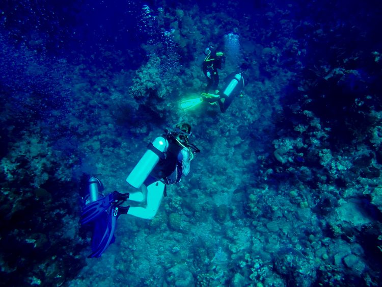 Libby Exline '19 scuba diving off the coast of the Turks and Caicos Islands.