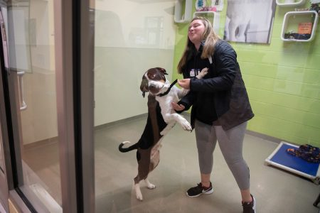 A dog eagerly greets Deaven Milam at the Lynchburg Humane Society