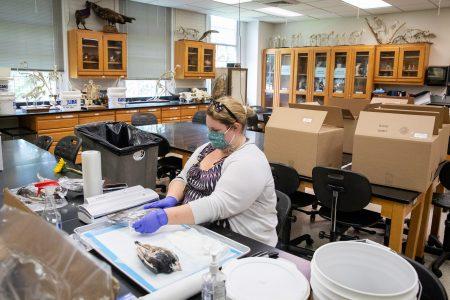 Biology lab technician Sara Harper vacuum seals specimens before putting them into the lab kits.
