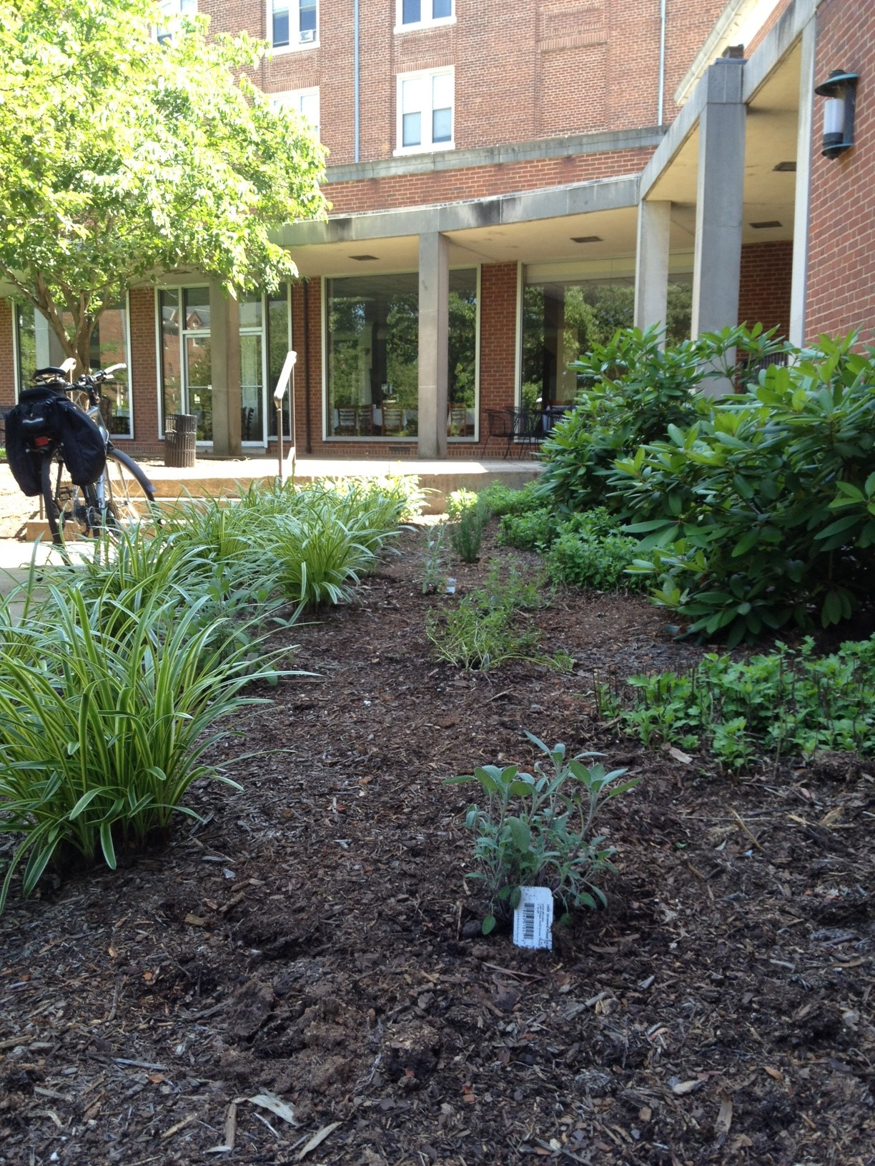 Herb Garden by Dining Hall