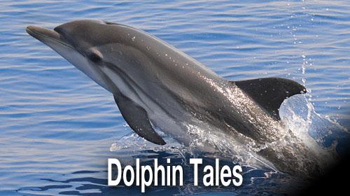 dolphin test