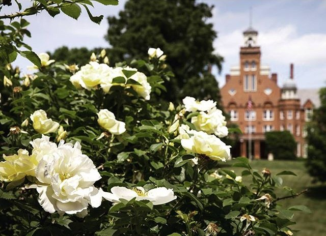 For #GroundhogDay, Punxsutawney Phil says spring is coming early. That's good news for roses at #RandolphCollege!