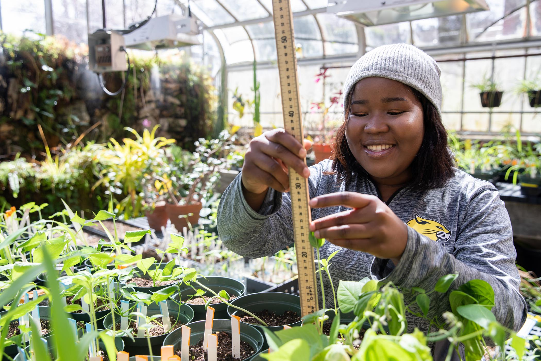 Jdody Misidor measures plant growth in the greenhouse at Martin Science Center