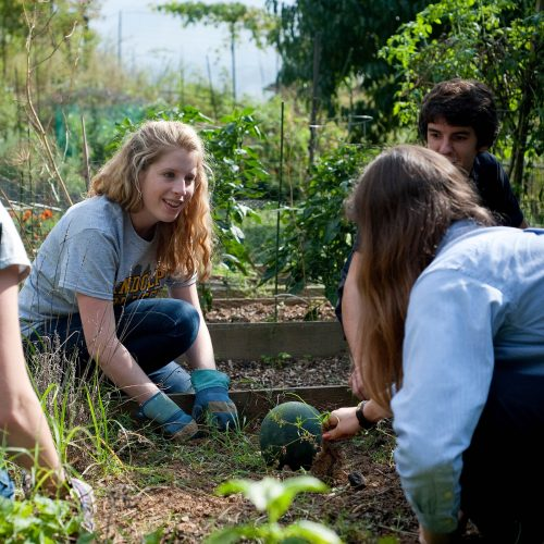 Students work in the Randolph College Organic Garden, a living sustainability and permaculture lab.