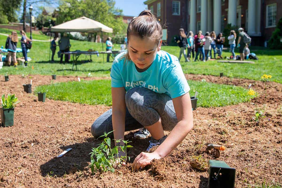 Female student plants flowers in a butterfly garden on front campus.