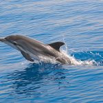 Photo of dolphin