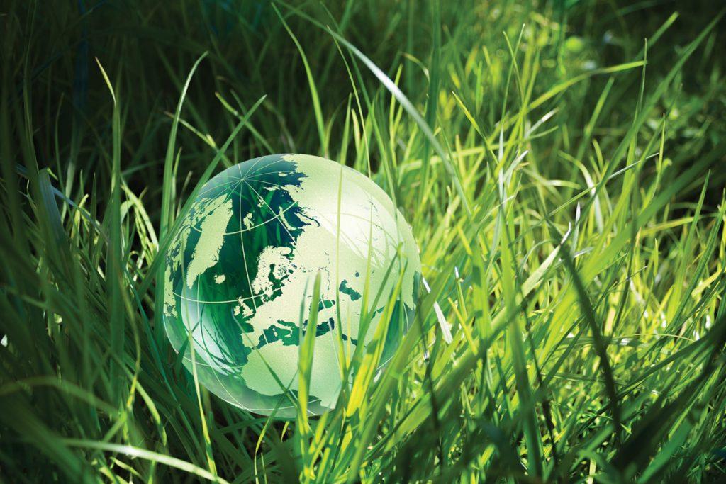 Green globe in green grass