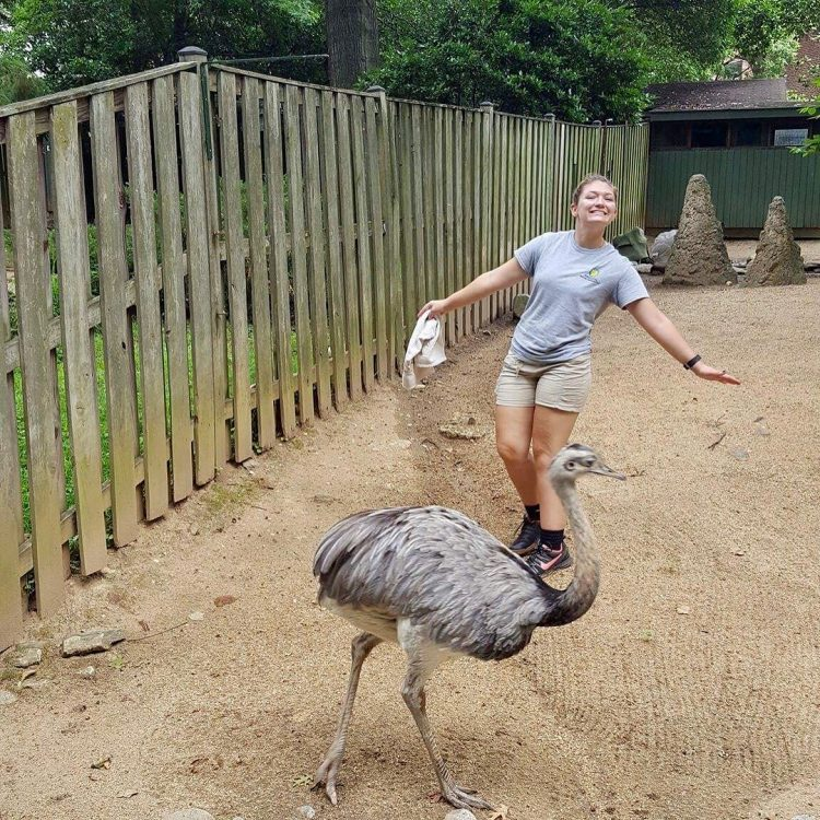 Megan Henning '18 with one of the greater rheas she took care of at the zoo.