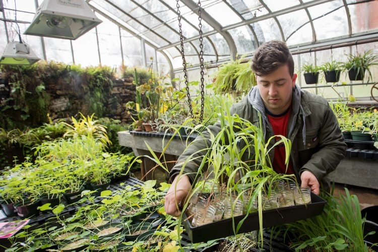 A student works with plant samples in the greenhouse behind Martin Science Building