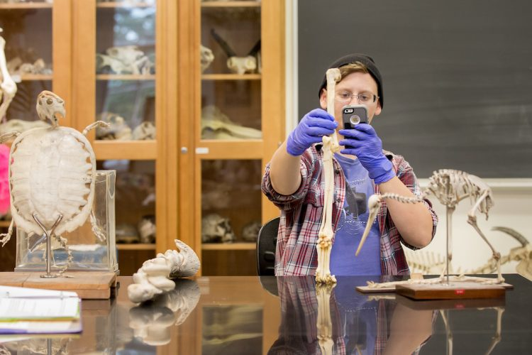 Rachel Harrison '18 takes a photo of fossils during a museum and heritage studies course