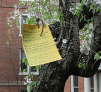 Poem hangs from a tree.